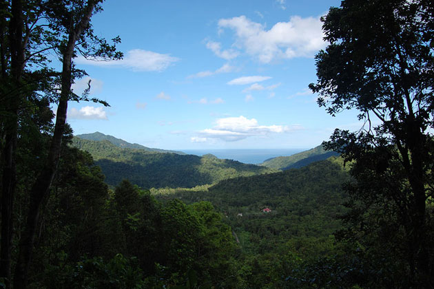 Dominica Forests